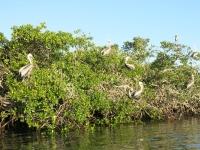 Pelikane schlafen noch