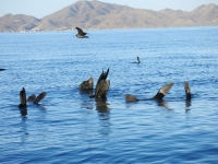 Seehunde sonnen sich