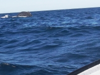 Wal in Sicht