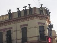 Mariachi auf dem Dach