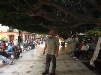 Ausreichend Baum aufm Plaza