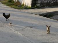 Hunde von Macheros