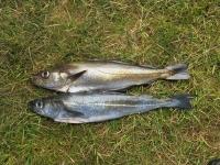 Fisch des Tages