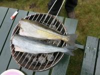 Grillfisch