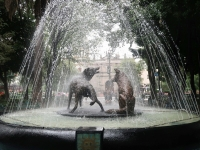 Coyoacan Kojoten im Jardin Centenario