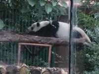6 Ein Panda frisst oder schlaeft