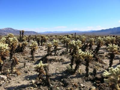 Weiter zum Cactus Garden
