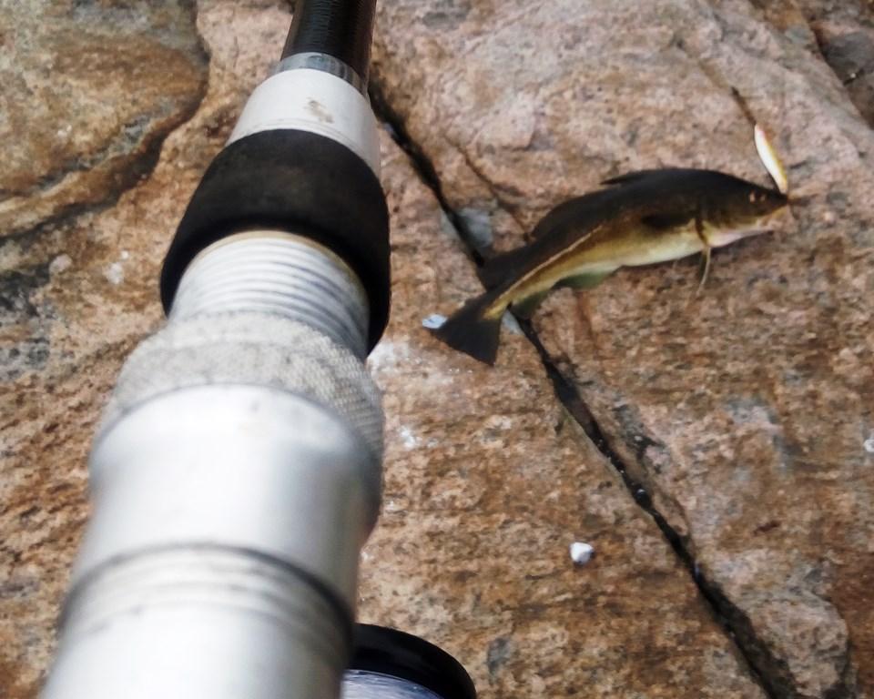 5_Annes Premierenfisch
