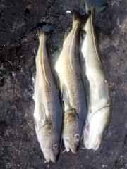 6_Annes Fischstrecke