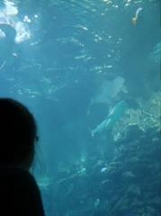 10_Meeresmuseum_mit_Schildkroeten_und_Haien