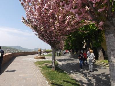 Blüten auf dem Burgberg