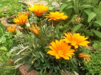 Blüten 1-10