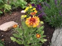 Blüten 2-37