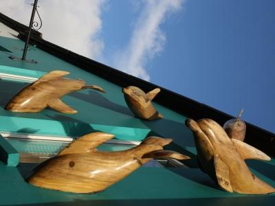 Delfinmania.jpg