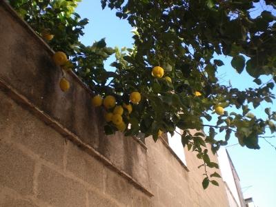 Das sind mal Zitronen