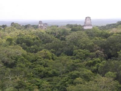 Tikal vom Templo IV.jpg