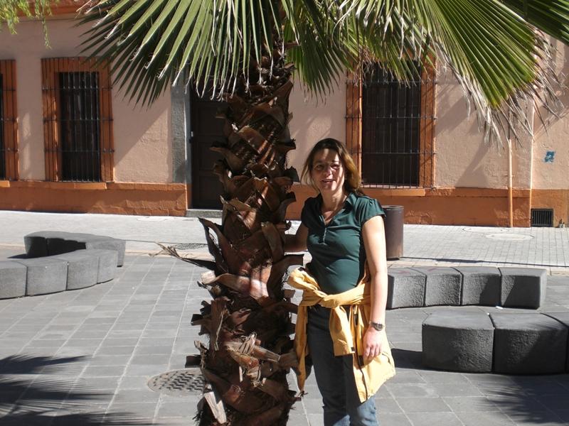 Endlich Palmen