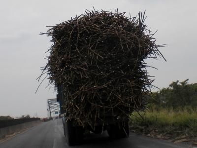 Zuckerrohr-Laster