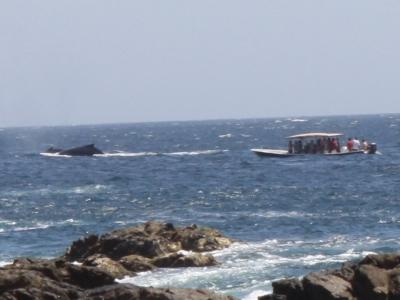 Wal und Boot